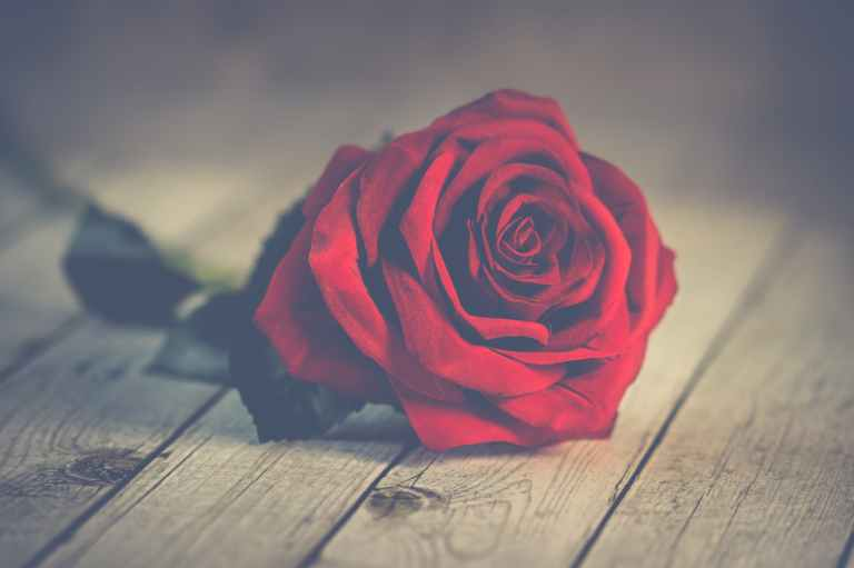 red rose on brown wooden surface